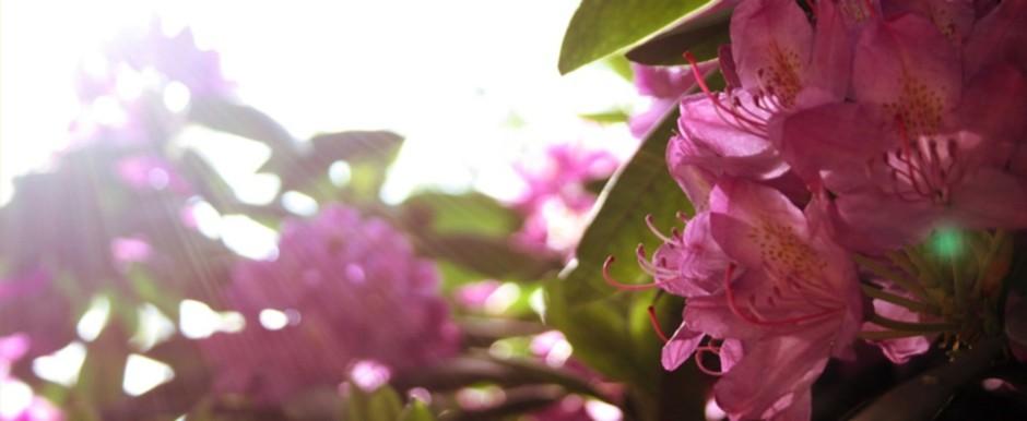 TC Gartendesign ist ein junges, auf Garten- und Landschaftsbau spezialisiertes Unternehmen.